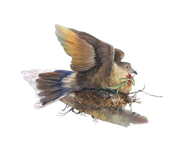 Акварельная живопись с птицей и цветами, на белом фоне