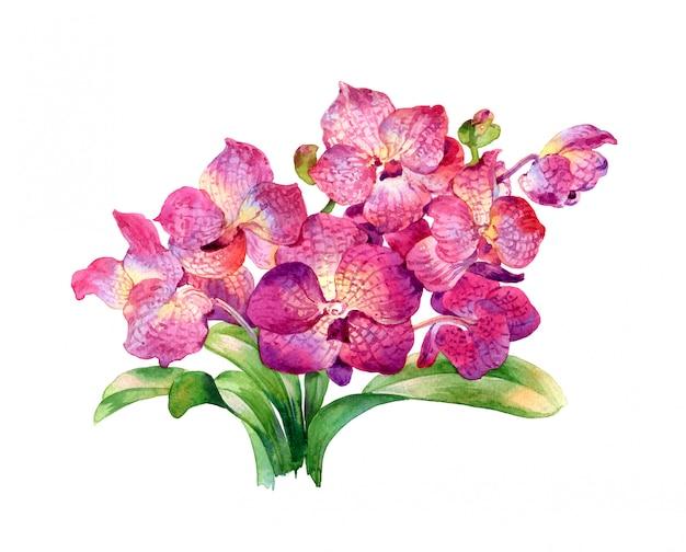 葉と花の水彩画、
