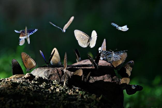 ジャングルの森で熱帯の蝶
