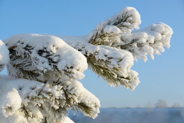 Холодная зима дерево покрыто снегом