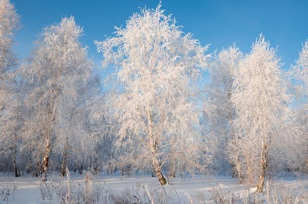 樹上の樹氷