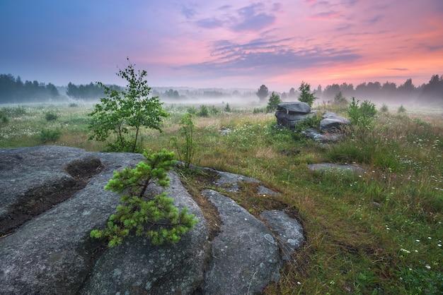 霧の牧草地に沈む夕日