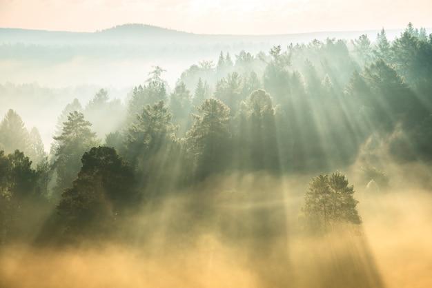 霧を突破する太陽光線