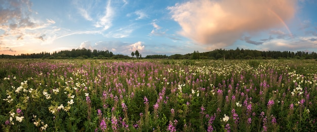 虹と夏の草原のパノラマ