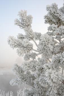 木の枝に寒い冬の霜