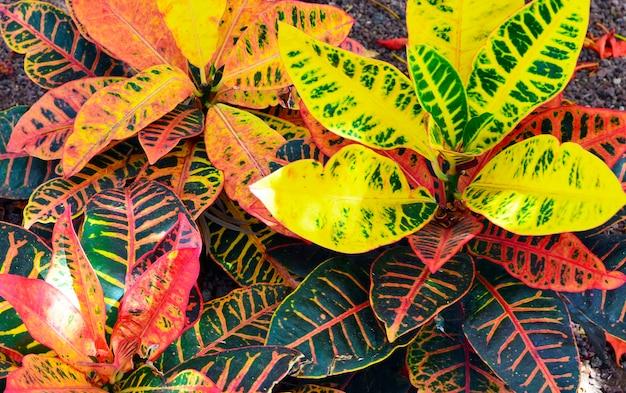 Кротоновая текстура растений