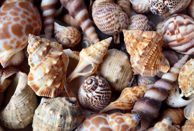 選択的フォーカスとしての貝殻。