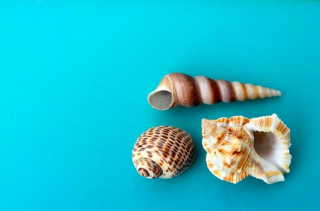 青いフラットの貝殻を置きます。