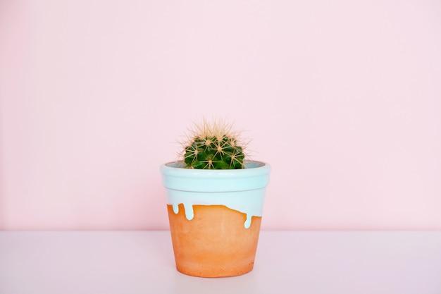 土鍋のサボテン
