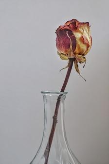 Сухая роза в стеклянной вазе