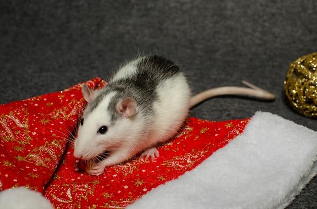 Новогодняя концепция. милая крыса символ года