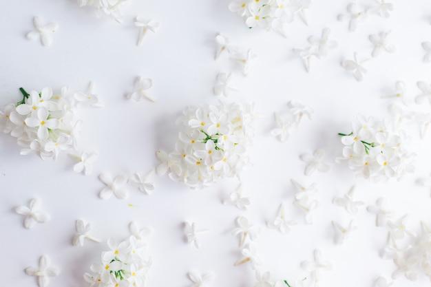 白い花と白い背景の上の鳥チェリーの花序