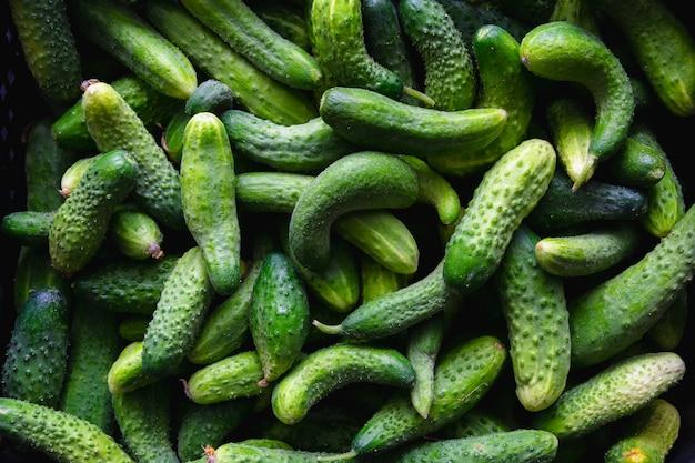 プラスチックの箱に新鮮な緑のキュウリ。自然有機食品の背景