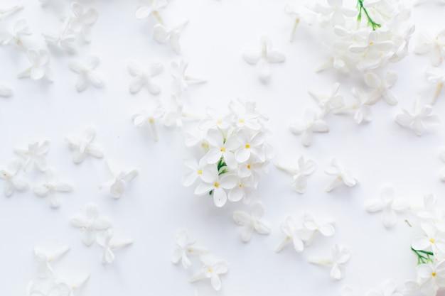 Белые цветы и соцветия черемухи на белом