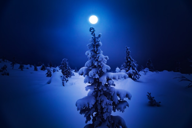 Одинокая ель на снежном холме.