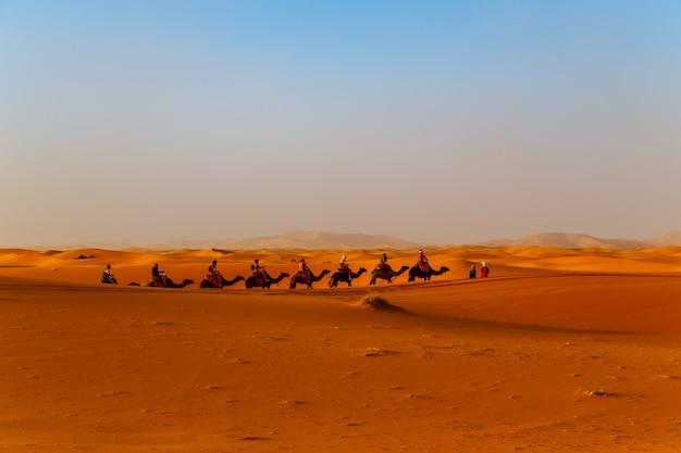サハラ砂漠で日没のラクダ