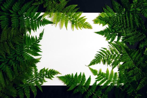 Белый фон с рамкой из листьев папоротника.