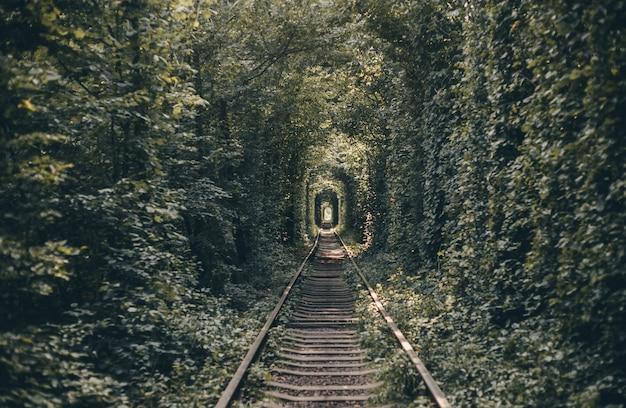 木と茂みの鉄道トンネル、愛のトンネル