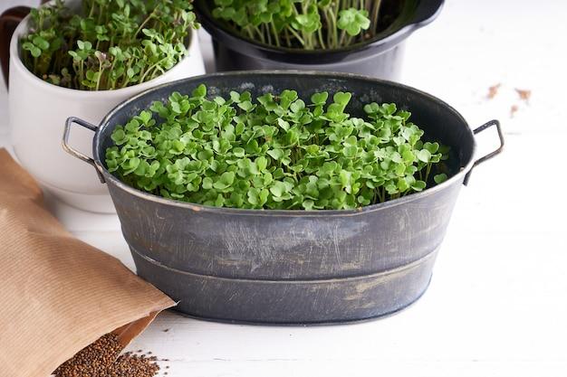 鍋の発芽マイクログリーン