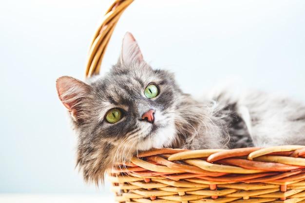 Серый пушистый ленивый кот лежит в корзине на светлом фоне.