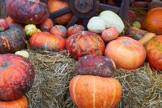 多くのオレンジ色のカボチャが野菜市場での販売を待っています