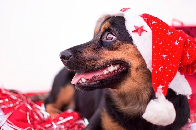 白い冬の背景に赤いクリスマス帽子と幸せな子犬