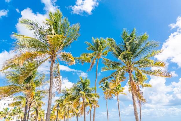 青い空を背景に美しいヤシの木