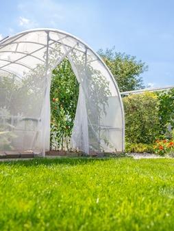 裏庭の民家の庭でトマトと暖かい家