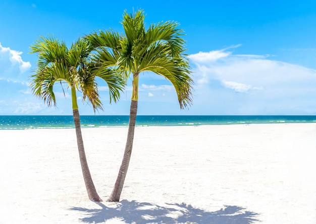 コピースペースを持つフロリダビーチ、アメリカの双子のヤシの木