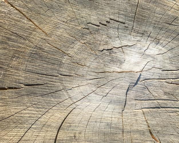 Фон деревянной текстуры. крупным планом ствола дерева с возрастными кольцами