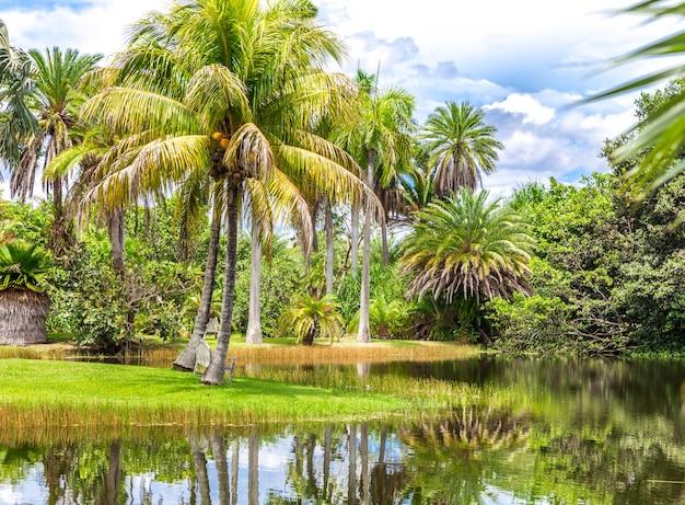 Красивый парк с тропической природой и пальмами