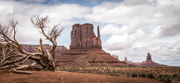 砂漠の風景の乾燥木