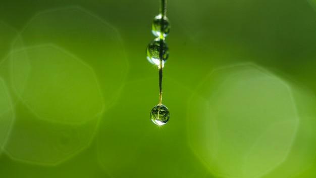 草の自然の露のクローズアップ