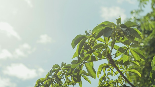 日光の下で空を背景に緑の葉