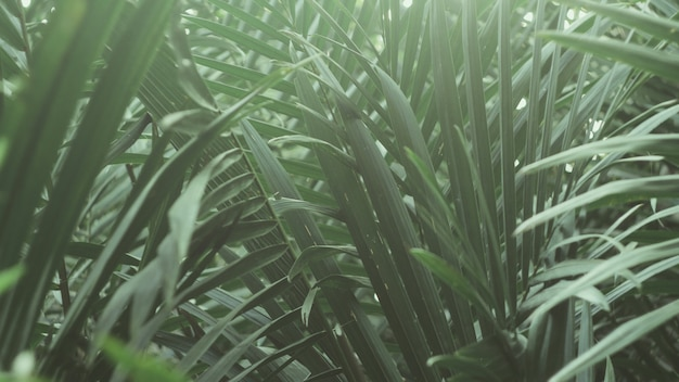 熱帯の緑の葉。自然の抽象的な壁紙