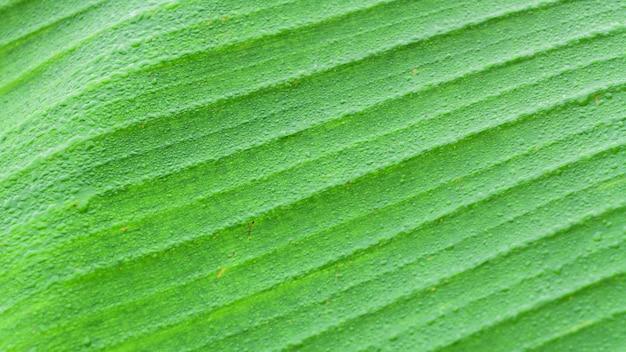 熱帯の緑はバナナを残します。自然の抽象的な壁紙