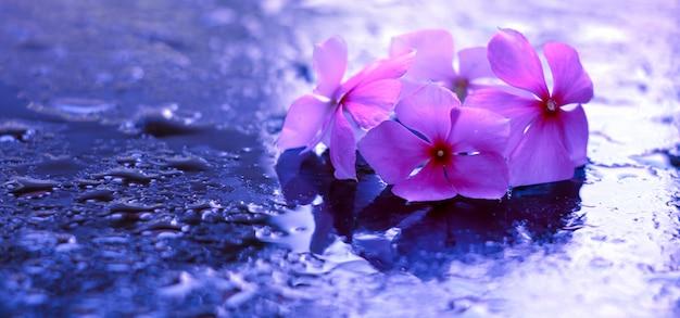美しい紫色の花と水滴。自然の概念の壁紙