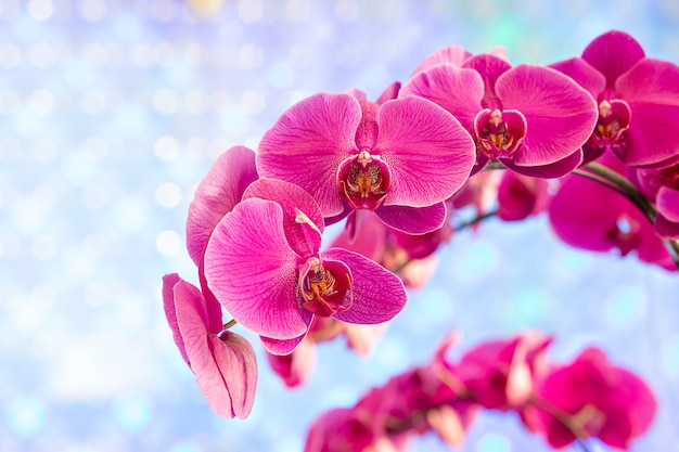 青色の背景にピンクの蘭
