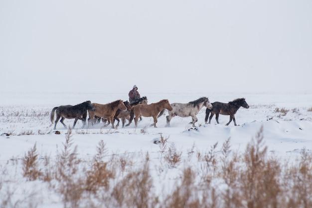 Девушка-пастух сидит на коне и пасет стадо овец в прерии с заснеженными горами на фоне