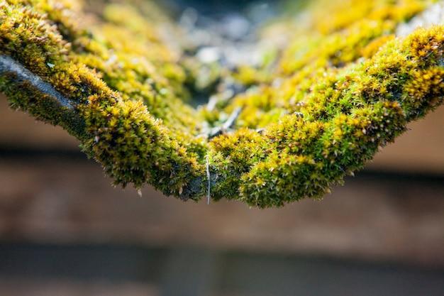 スレート屋根は緑の苔で覆われています