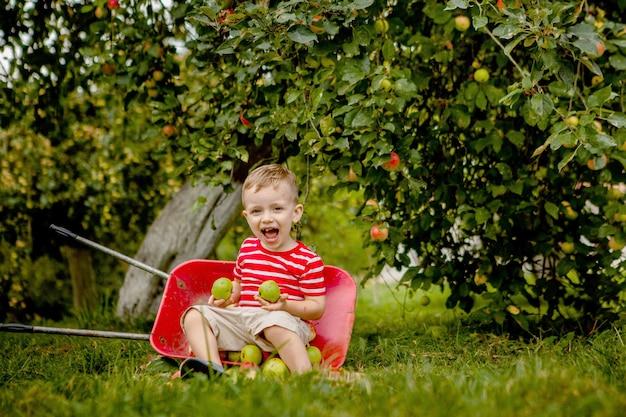 Детский сбор яблок на ферме. маленький мальчик, играя в яблоневом саду. малыш собирает фрукты и сажает их в тачку. ребенок ест здоровые фрукты на осенний урожай. веселье на свежем воздухе для детей