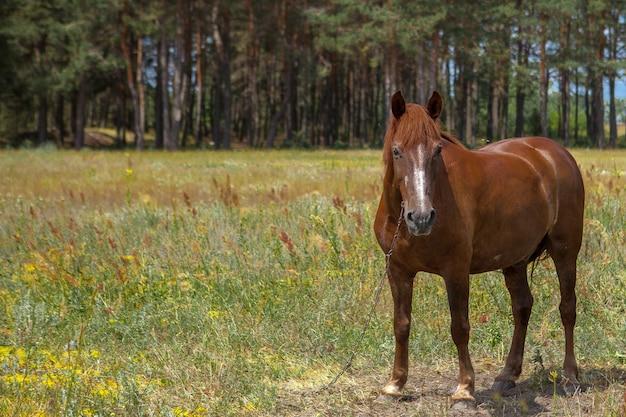 森の空き地にいる馬。明るい夏の写真。村の性質