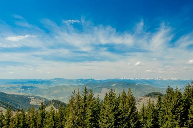 Великолепный панорамный вид на хвойный лес, на могучие карпаты и красивое голубое небо. красота дикой девственной украинской природы. миролюбие