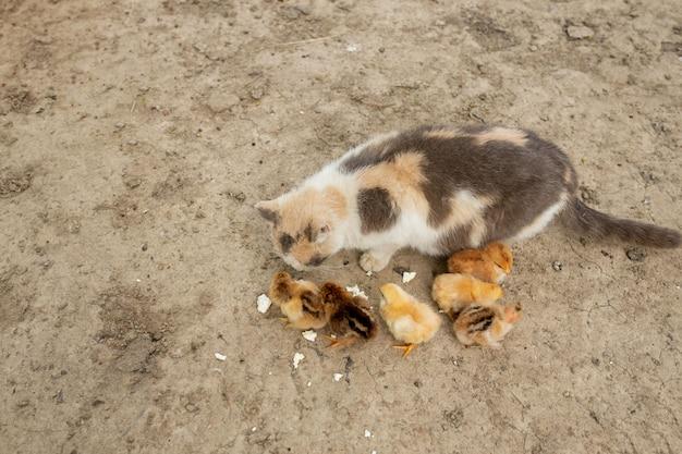 親切な猫と一緒に食べるイースターチキン。フレンズ