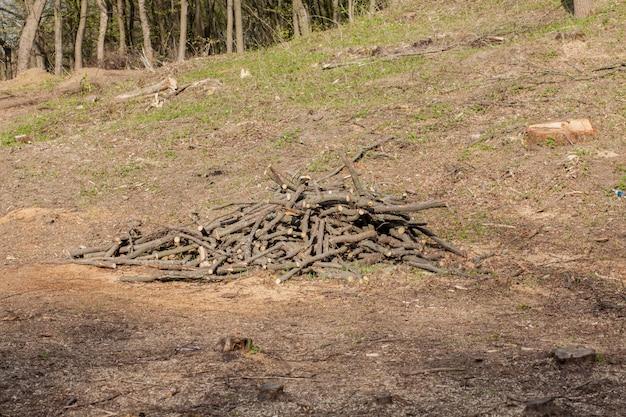 晴れた日の松林の開発。切り株とログは、乱獲が森林破壊をもたらし、環境と持続可能性を危険にさらすことを示しています