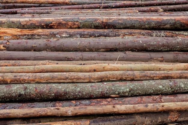 山に積み上げられた森の中の松林の木の丸太。切り刻まれたばかりの木の丸太が山の上に積み重なっています。
