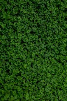 多くの葉を持つ緑の茂み