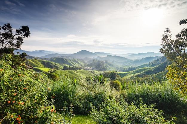 カルパティア山脈の眺め