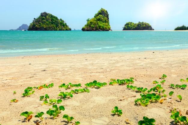 クラビ県の熱帯のビーチ。