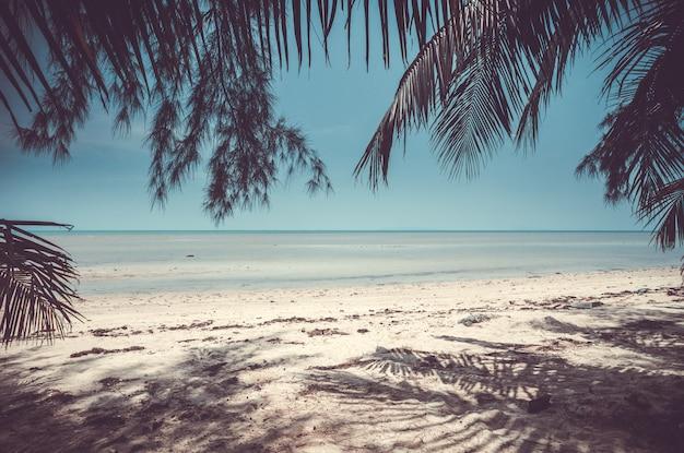 Песчаный берег океана. тропические тайские растения.